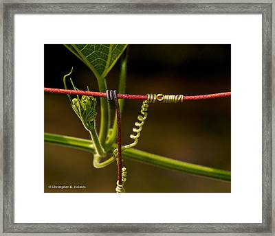 Mimic Framed Print by Christopher Holmes