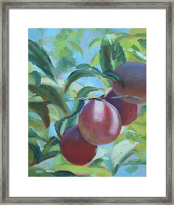 Mimi's Plums Framed Print