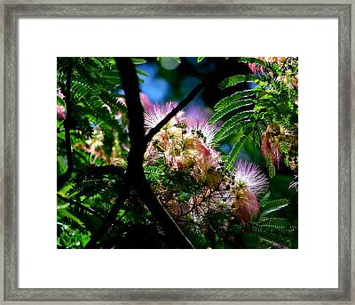 Mimosa Framed Print by Deena Stoddard