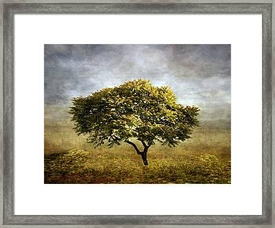 Mimosa Magic Framed Print