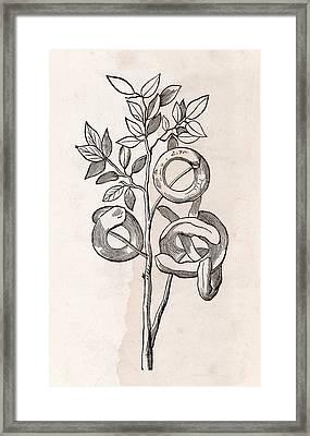 Mimosa Plant Framed Print