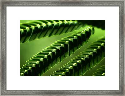 Mimosa Tree Leaf Abstract Framed Print by Michael Eingle