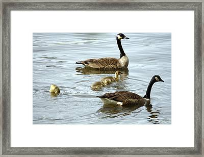 Mind Of His Own. Framed Print by Valerie Wolf