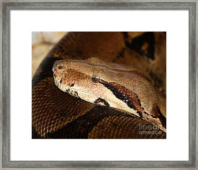 Mindfully Watching Framed Print