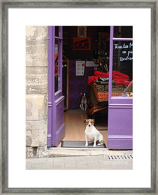 Framed Print featuring the photograph Minding The Shop. Two French Dogs In Boutique by Menega Sabidussi