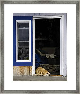 Minding The Store Framed Print