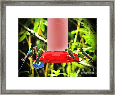 Mindo Hummer Gathering Framed Print by Al Bourassa