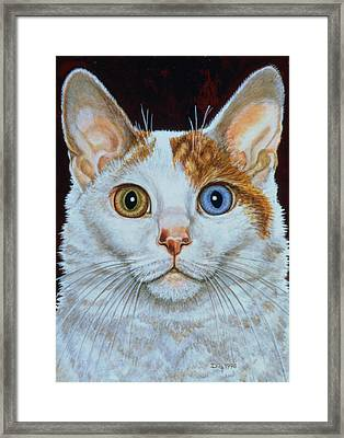 Minette Framed Print by Ditz