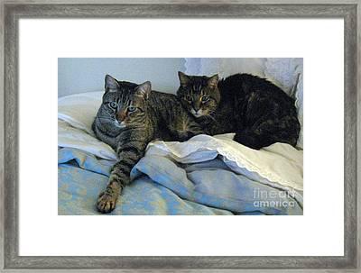 Ming And Sheba Resting  Framed Print