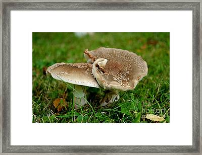 Framed Print featuring the photograph Mingling Mushrooms by Scott Lyons