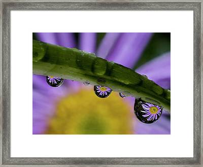 Mini Asters Framed Print