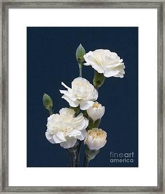 Mini Carnations Framed Print