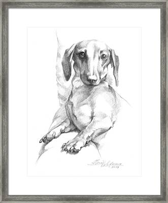 Mini Dachshund Sitting In A Chair Framed Print