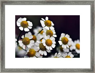 Mini Daisies Framed Print