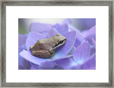 Mini Frog On Hydrangea Flower  Framed Print by Jennie Marie Schell