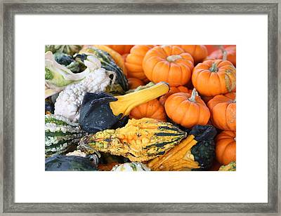 Framed Print featuring the photograph Mini Pumpkins And Gourds by Cynthia Guinn