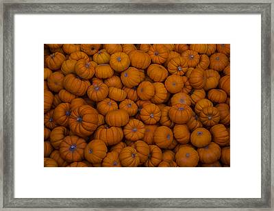 Mini Pumpkins Framed Print by Garry Gay