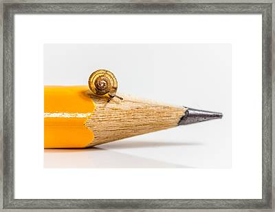 Framed Print featuring the photograph Mini Snail. by Gary Gillette
