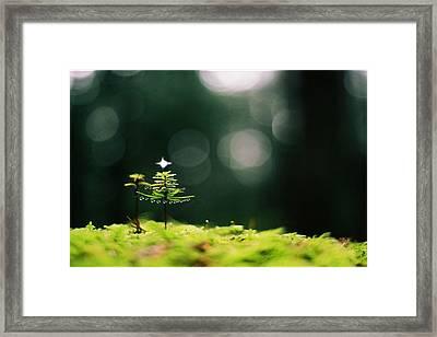 Miniature Christmas Tree Framed Print by Cathie Douglas