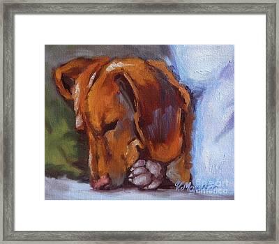 Miniature Dachshund Dog - Doxin Framed Print