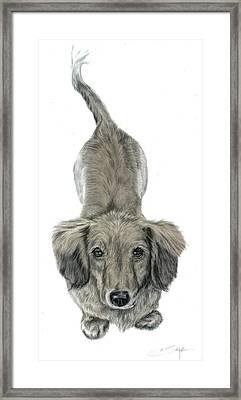 Miniature Dachshund Puppy Framed Print by Elizabeth Sage