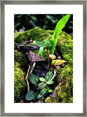 Framed Print featuring the photograph Miniature Garden by Jim Thompson