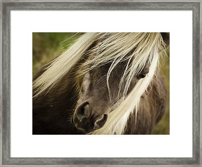 Miniature Horse Framed Print by Jean Noren