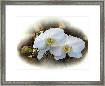 Miniature Orchid Framed Print by Kaye Menner