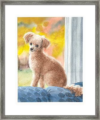 Miniature Poodle Watercolor Portrait Framed Print by Mike Theuer