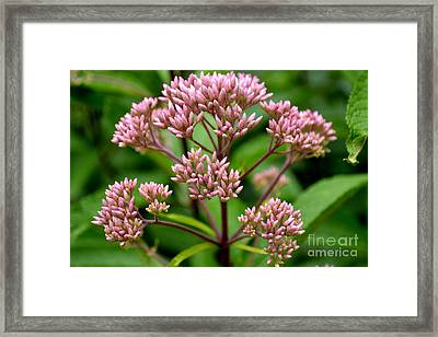Framed Print featuring the photograph Miniature Purple Cones by Scott Lyons