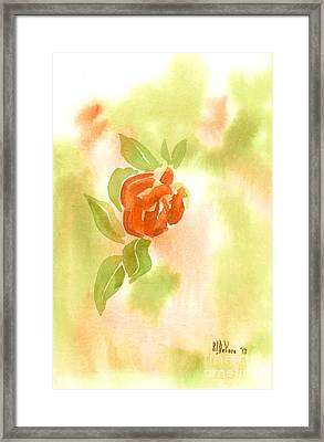 Miniature Red Rose In The Garden Framed Print