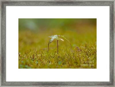 Miniature Tree Framed Print by Sarah Crites