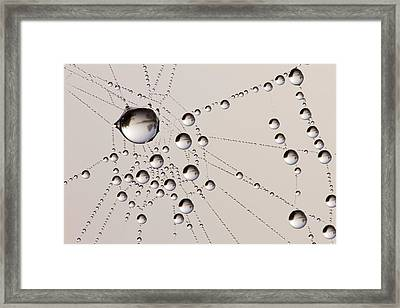 Miniature Worlds Framed Print by Roeselien Raimond