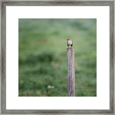 Minimalism Mockingbird Framed Print