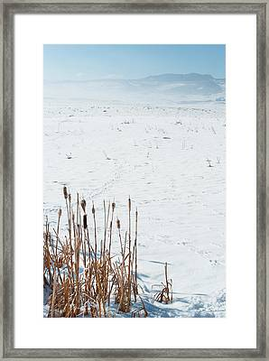 Minimalist Cattail Prairie In Colorado Framed Print by Julie Magers Soulen