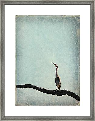 Minimalist Vintage Inspired Green Heron On Pale Blue Sky Framed Print