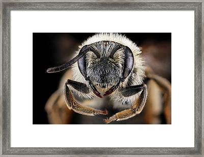Mining Bee Framed Print