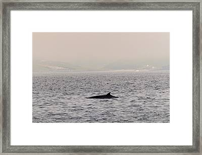 Minke Whale Framed Print by Kai Bergmann