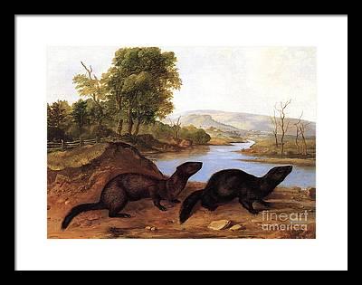 American Mink Framed Prints