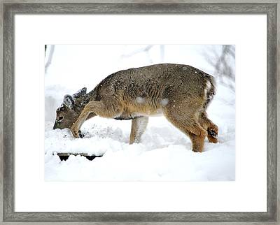 Framed Print featuring the photograph Minnesota Winter Struggles by Dacia Doroff