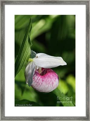 Minnesota's Wild Flower Framed Print