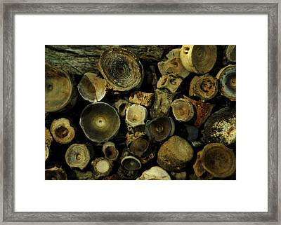 Miocene Fossil Vertebrae Collection Framed Print