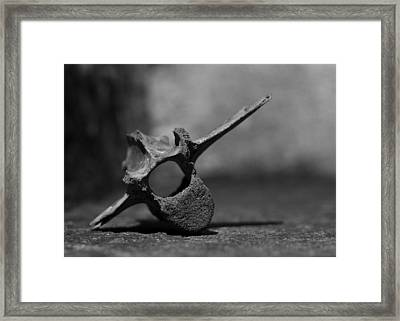 Framed Print featuring the photograph Miocene Fossil Whale Vertebra by Rebecca Sherman