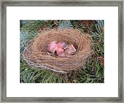 Framed Print featuring the photograph Miracle Of Birth _ Baby Robins 4 by Margaret Newcomb