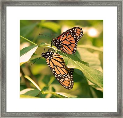 Framed Print featuring the photograph Mirror Image by Karen Silvestri