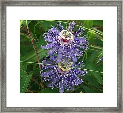 Framed Print featuring the photograph Mirror Image by Shirley Moravec