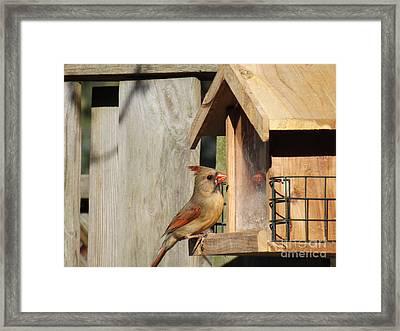 Mirror Mirror On The Birdfeeder Framed Print by Brenda Brown