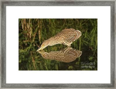 Mirror Mirror On The Wall Who Is The Fairest Heron Of All Framed Print by Heather King