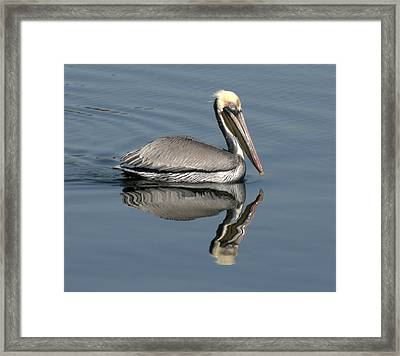 Mirror Pelican Framed Print
