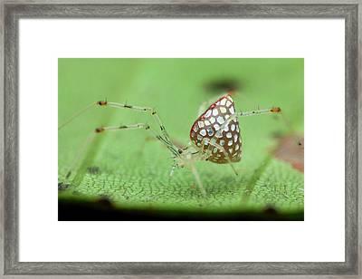Mirror Spider Framed Print by Melvyn Yeo